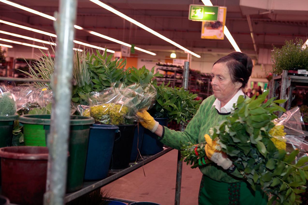 7. Mai 2010 Uhrzeit: 4.27h Foto: Anja Cord - Dipl. Ing. Maria Tewes, Inhaberin der Staudengärtnerei Dr. Rewald/Tewes, sortiert Pflanzen an ihrem Stand. Sorgfältig verteilt sie Blumen auf einzelne Wagen, um den Wiederverkäufern, die ihre vorbestellten Waren abholen, Wartezeit zu sparen.