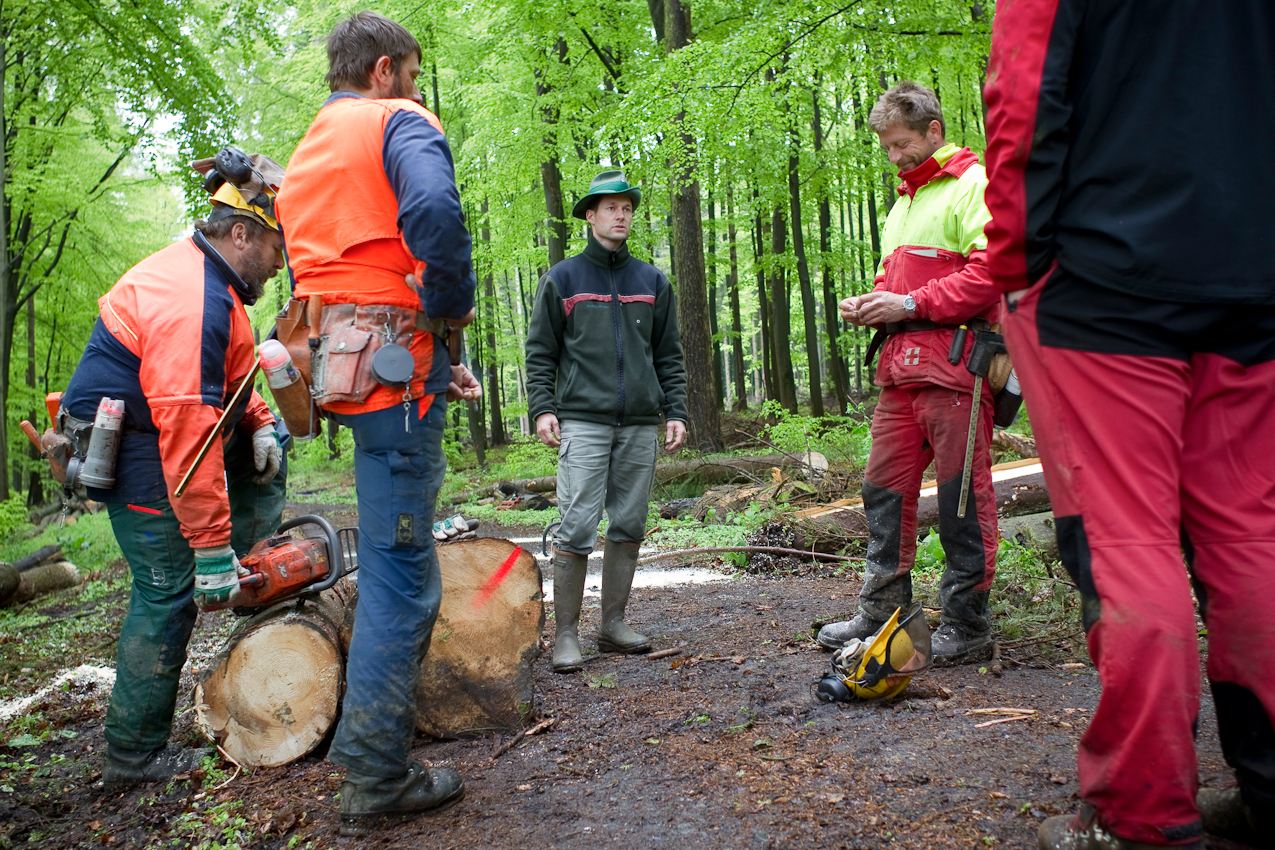 Brahmwald, Oedelsheim, Oberweser. Förster Gunter Mantel spricht mit Waldarbeitern. Mantel muss als Revierforster dafur sorgen, dass eine vorgegebene Menge Buchenholz pro Jahr geschlagen und verkauft wird.