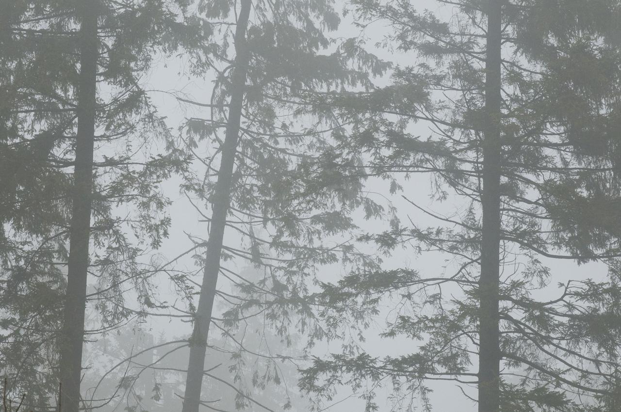 Fichten im Nebel am Waldskulpturenweg bei Schmallenberg-Schanze - diese Impression prägt das Landschaftsbild an einem stark regnerischen Frühlingstag im Sauerland. - Dieses Bild wurde am 07.05.2010 um 16:12:33 Uhr in Schmallenberg-Schanze (Sauerland, Deutschland) aufgenommen.