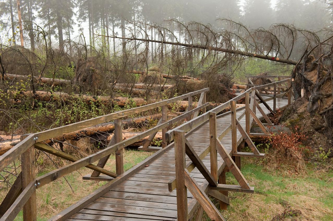 Der Kyrillpfad bei Schmallenberg-Schanze zeigt auch noch Jahre später, welche Schäden der Orkan Kyrill im Januar 2007 hinterlassen hat. Die Fläche bleibt sich selbst überlassen, so dass der Wanderer von gesicherten Stegen aus erleben kann, wie die Natur ohne Hilfe des Menschen neuen Wald zwischen den vom Sturm gefällten Stämmen entstehen lasst.  - Dieses Bild wurde am 07.05.2010 um 16:53:16 Uhr in Schmallenberg-Schanze (Sauerland, Deutschland) aufgenommen.