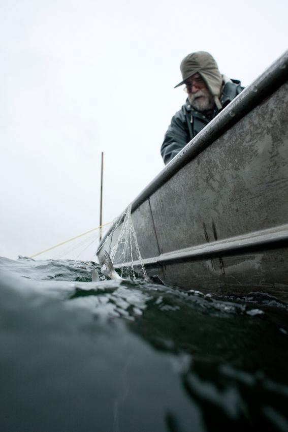 Der Fischer Johann Schuster am Vormittag des 7. Mai 2010 in seinem Boot auf dem Starnberger See. Gleich wird eine Starnberger See Renke an Bord geholt.