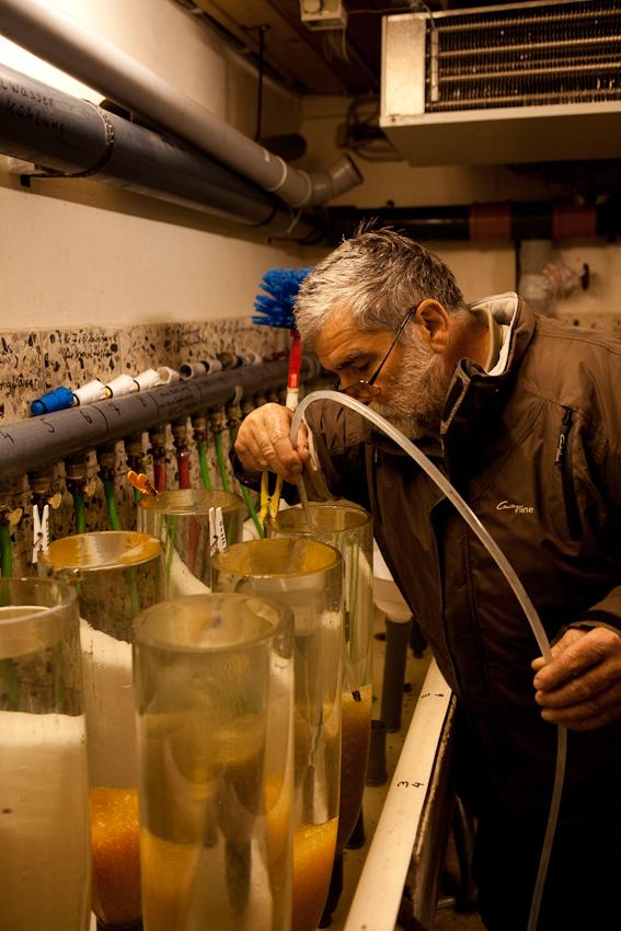 Der Fischer Johann Schuster im Bruthaus der Fischereigemeinschaft. Mit einem von ihm entwickelten Verfahren und mit ebenfalls von ihm speziell konstruierten Geraeten kuemmert er sich auch um die Aufzucht der Fische im Starnberger See, insbesondere um Renke und Hecht. In den Tanks sieht man den Laich von Renken, deren Wasser er gerade reinigt.