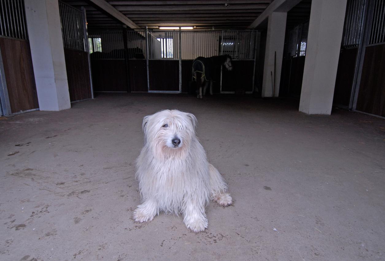 Am Anfang des Reittages heißt es, auf die Menschen warten: Hund Crapule und Pferd Mary im Stall um 8:28 Uhr.