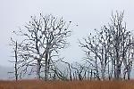 Gespensterwald im Regen